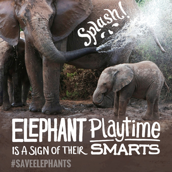 Help the elephants and help the world. Sign up here to help The Nature Conservancy.