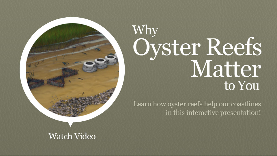 Natural Oyster Reef deeply explore The Nature