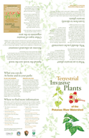 A guide to identifying invasive plants commonly found in the Potomac River watershed - and maybe your own backyard!