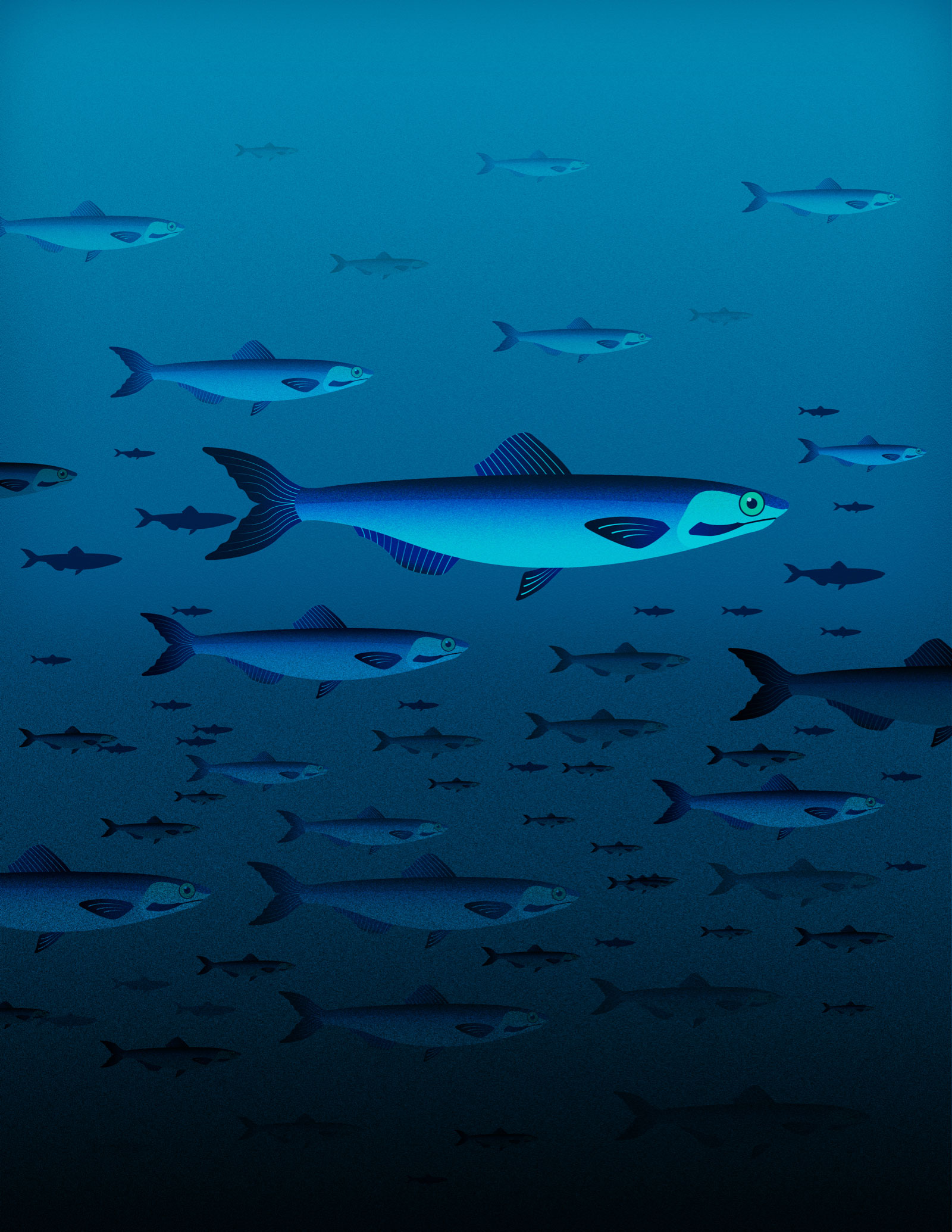 Graphic design illustration of mackerel fish in a sea getting more populous at the bottom.