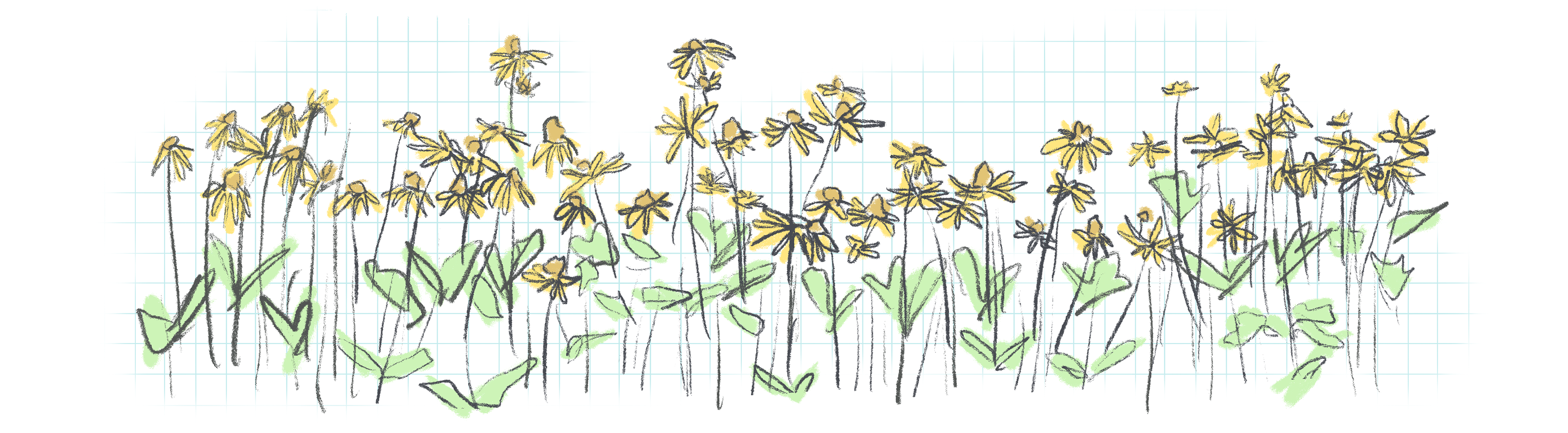 a sketchy illustration of yellow wildflowers against a graph paper background