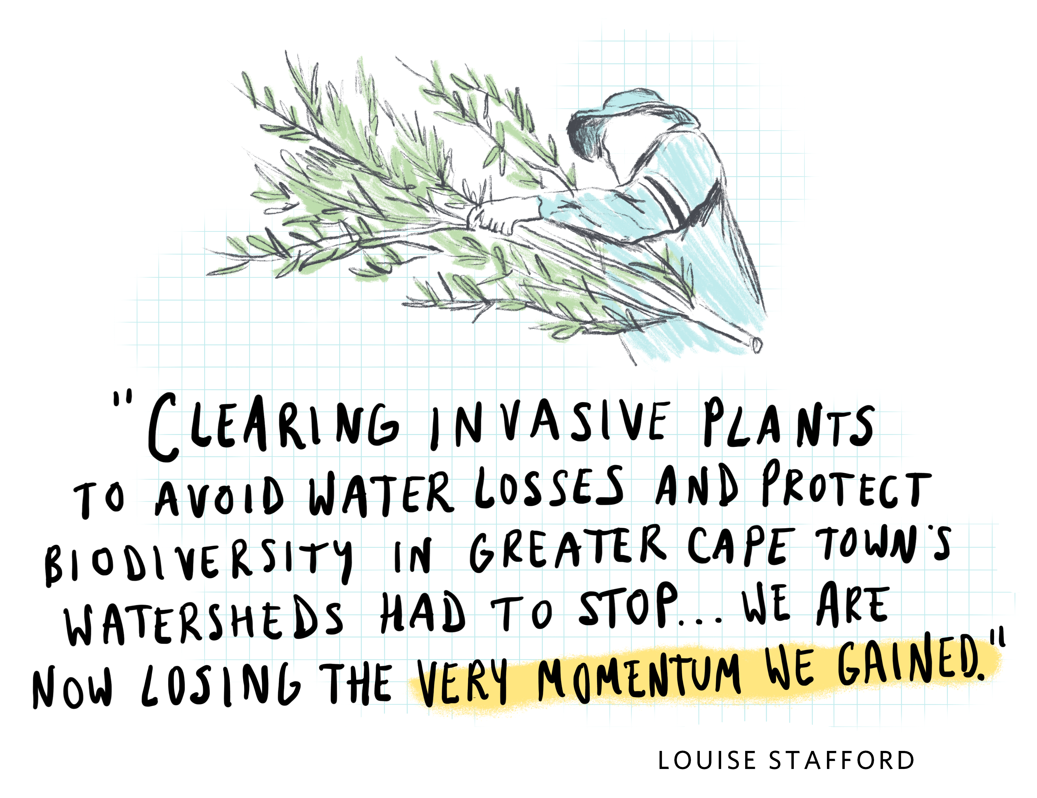 a sketchy illustration of a person carrying tree branches, with a handwritten quote underneath that says 'clearing invasive plants to avoid water losses and protect biodiversity in greater Cape Town's watersheds had to stop...we are now losing the very momentum we gained.'