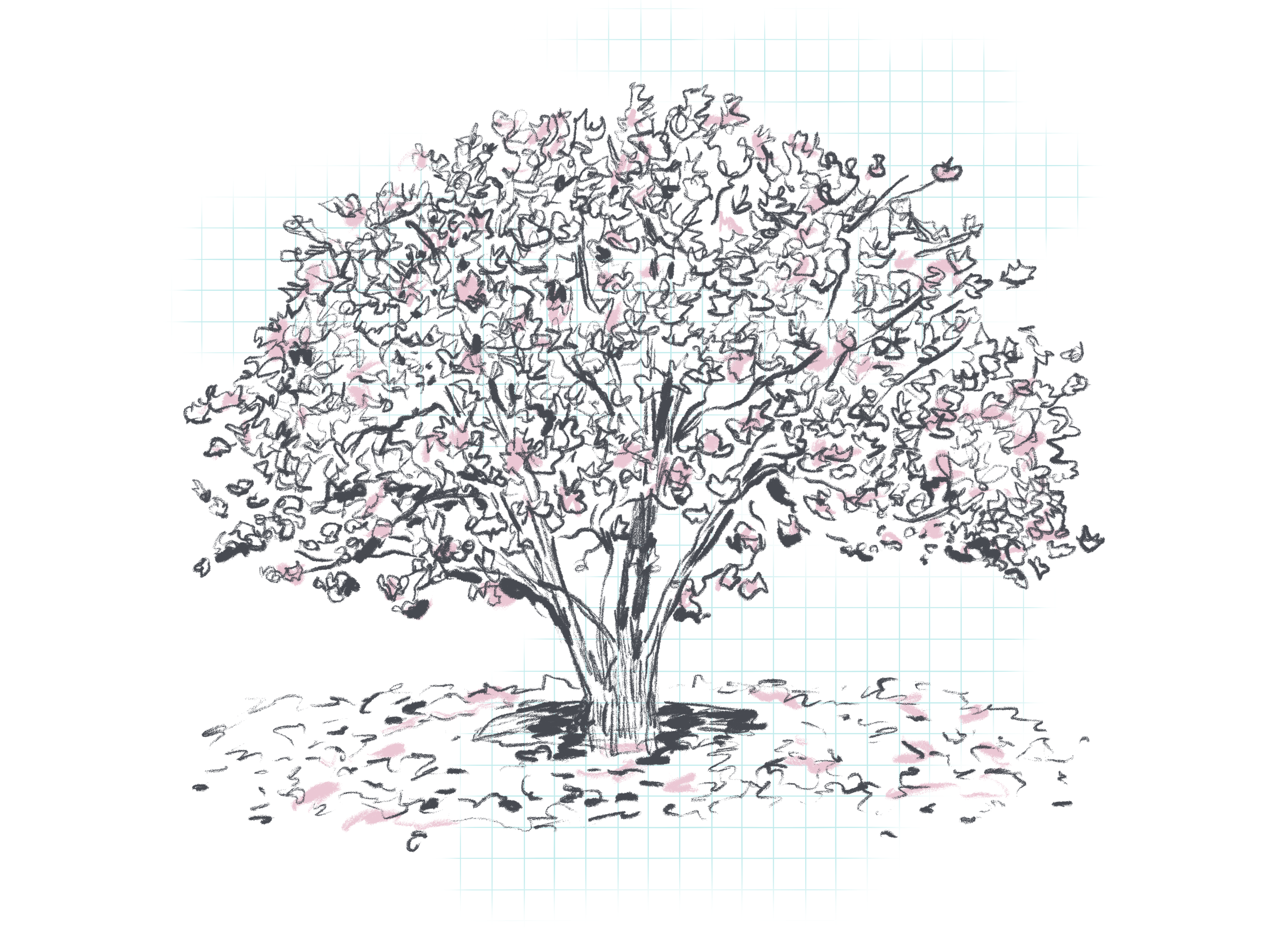 a sketchy illustration of a magnolia tree in bloom with pink petals scattered on the ground