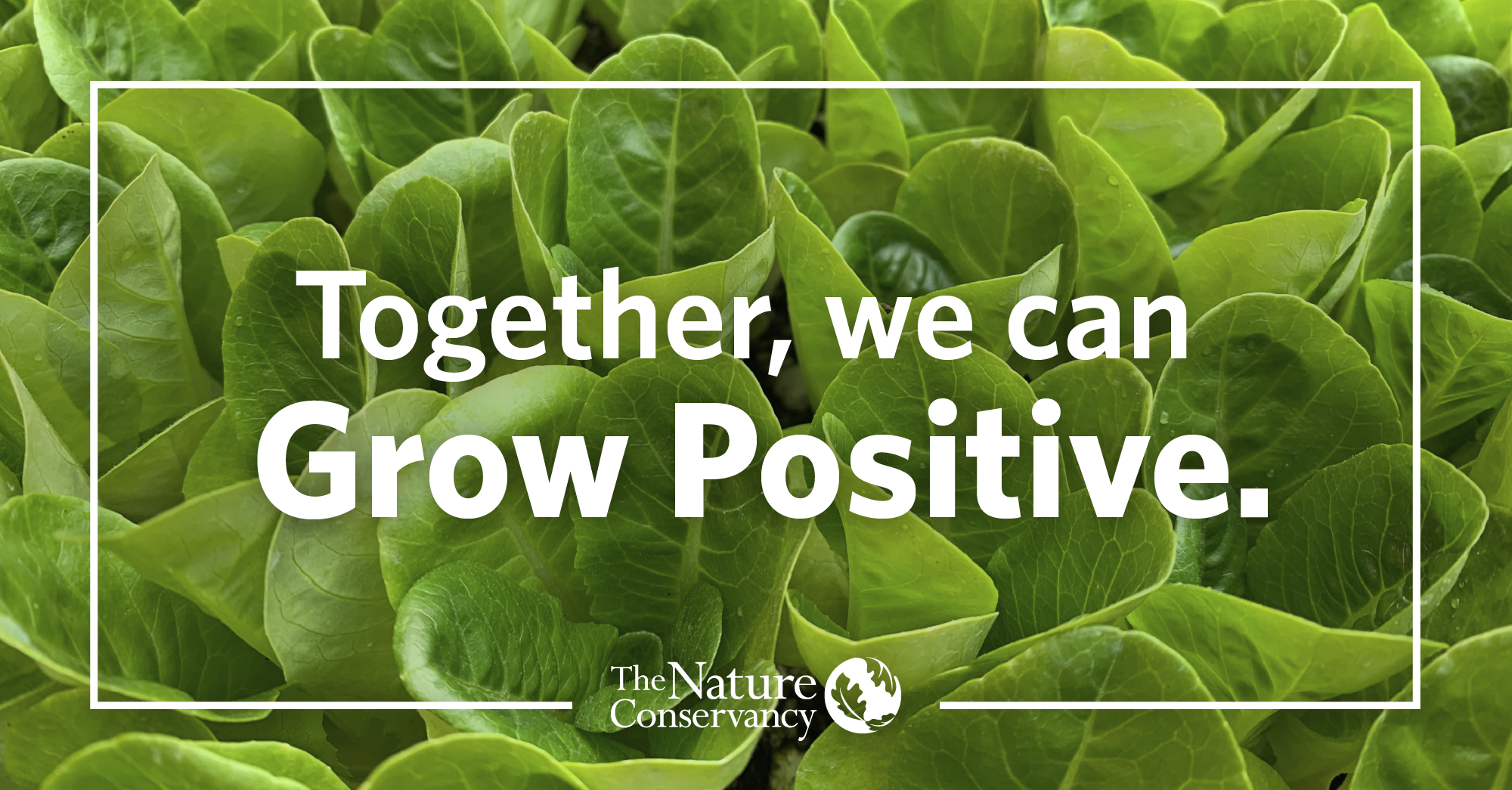 white text that says 'together, we can grow positive' with tnc logo over a photo of dark red apples