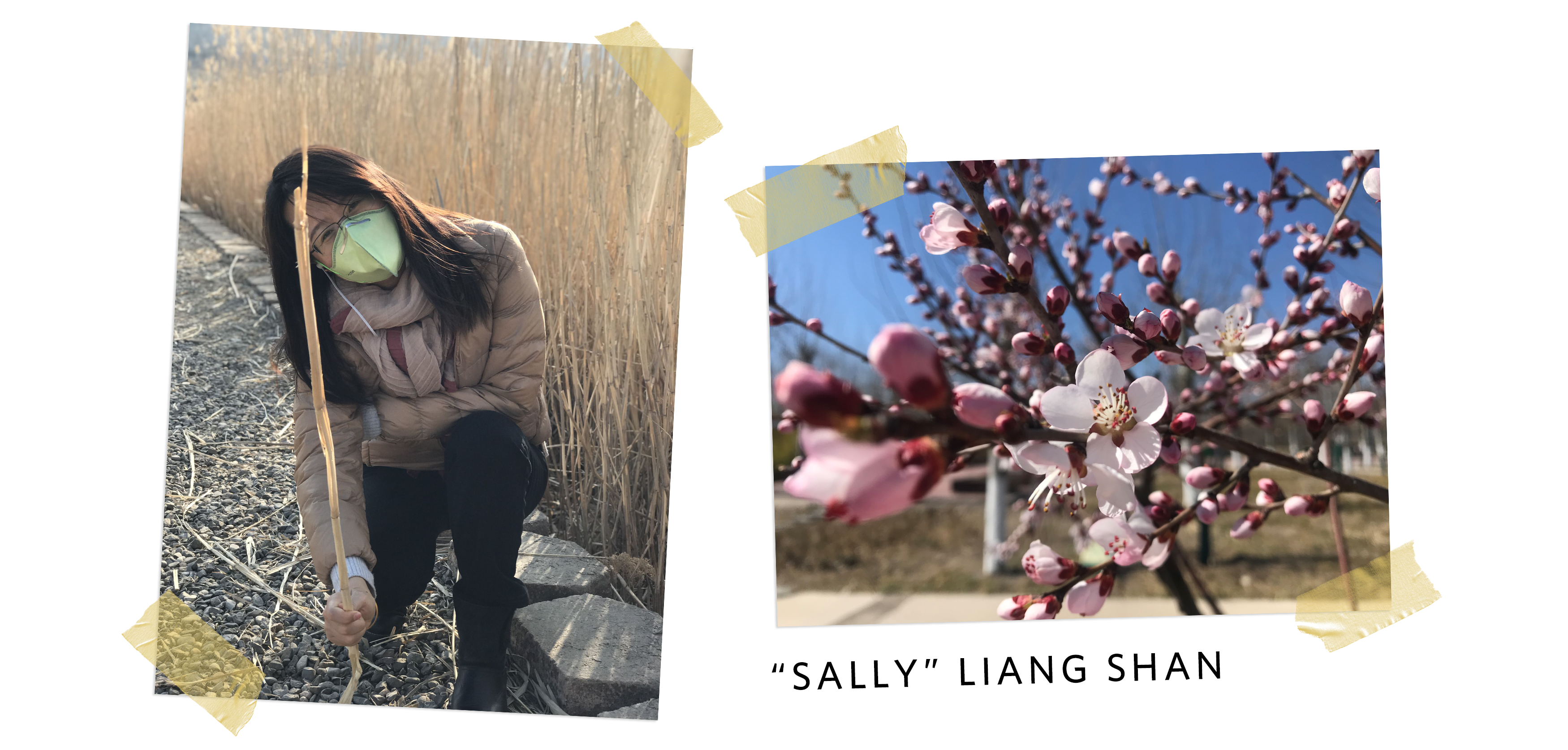 two photos side by side, on the left a woman wearing a mask kneels in a park, on the right is a close up of a cherry blossom branch in bloom. Underneath, text that says