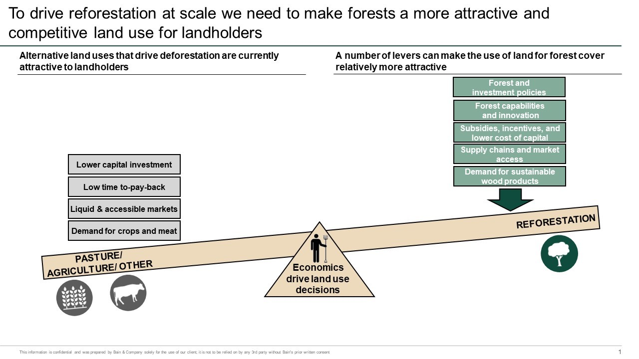 reforestation as an investment