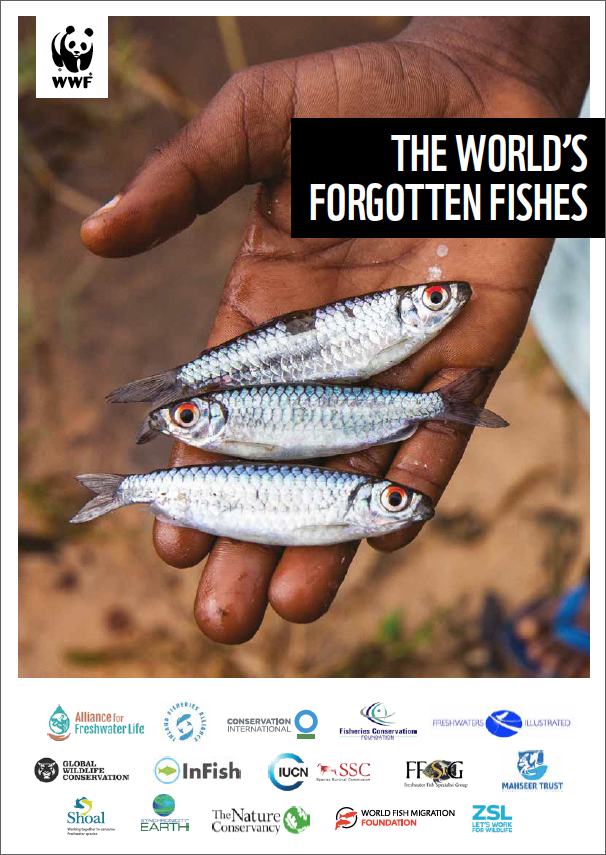 report cover with title of report and photo of a hand holding three small fish