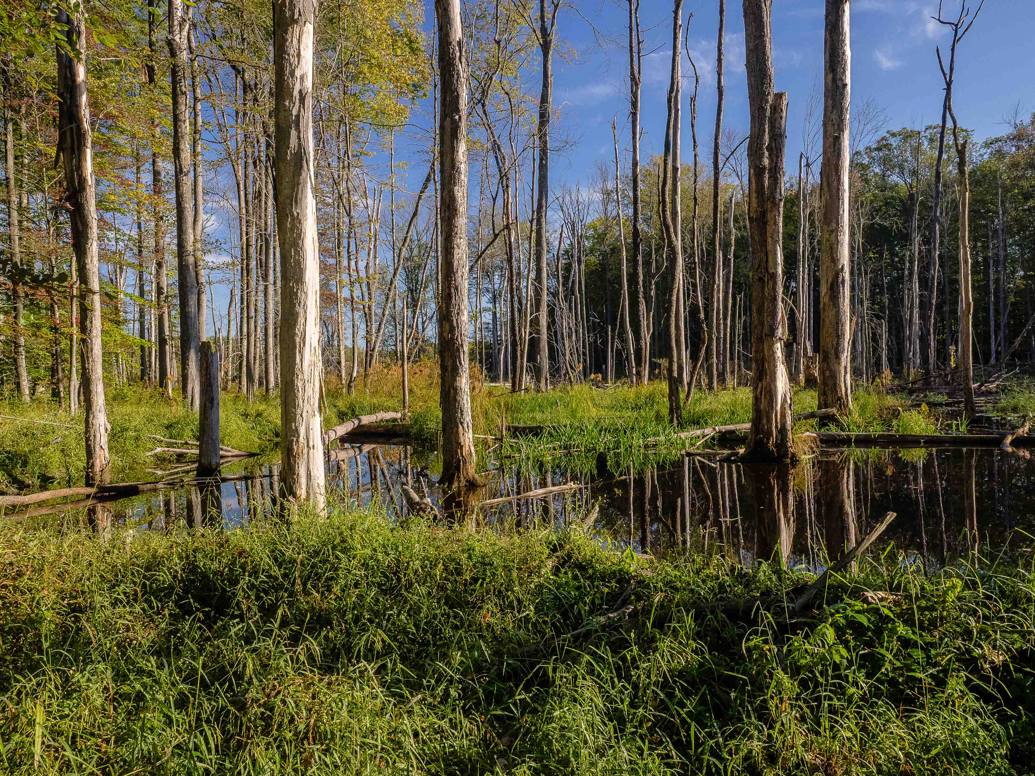 Wetland at Morgan Swamp Preserve