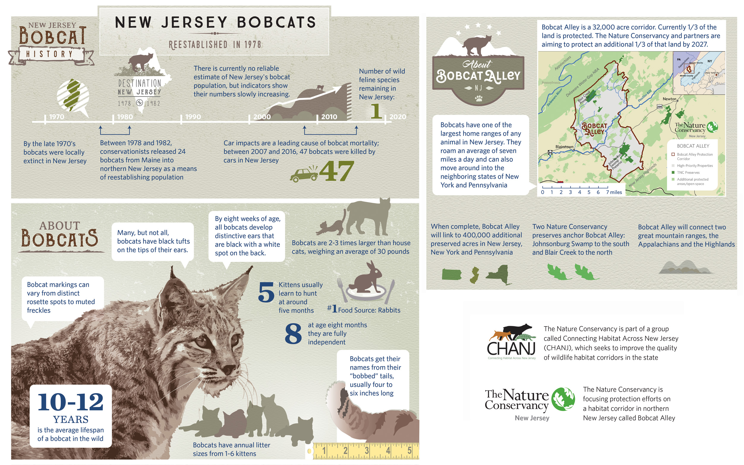New Jersey Bobcat Inforgraphic