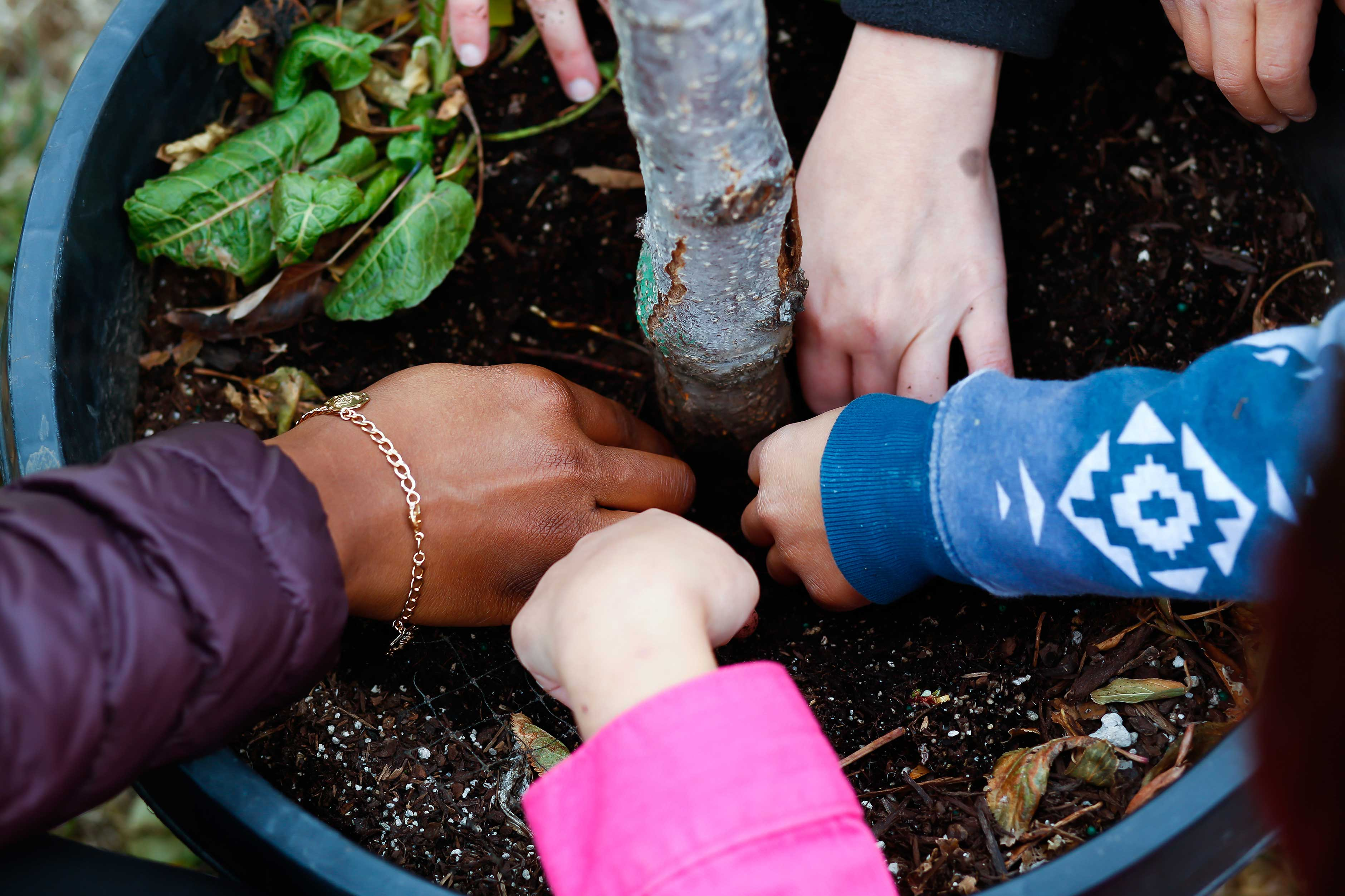 Hands patting down soil around a tree.
