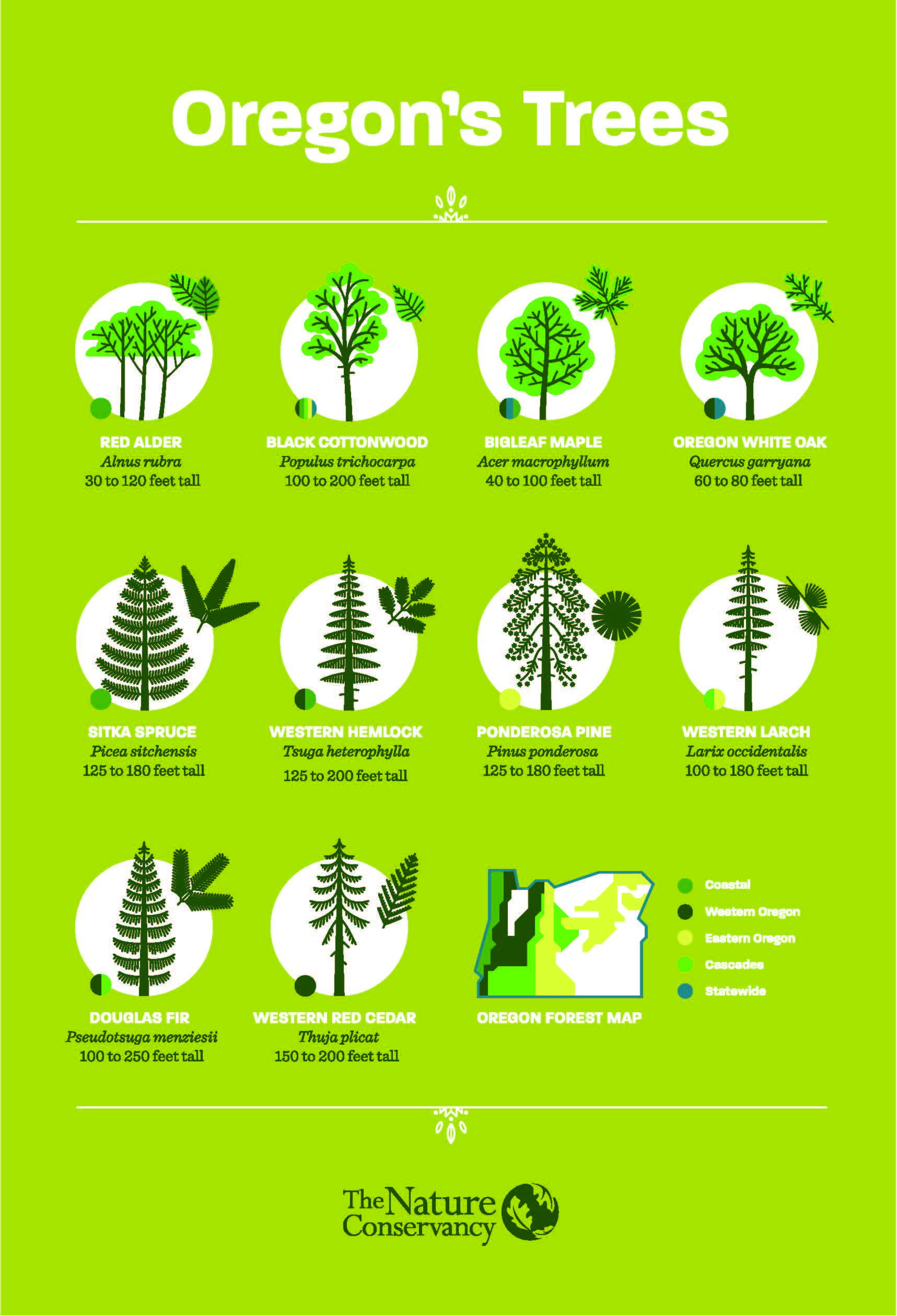 Oregon Tree Guide