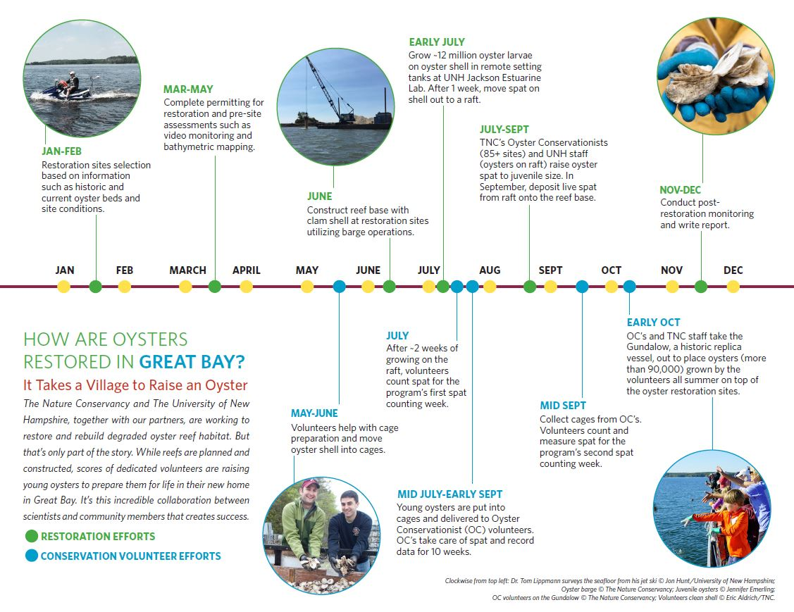 A timeline of our oyster restoration and conservation efforts in New Hampshire.