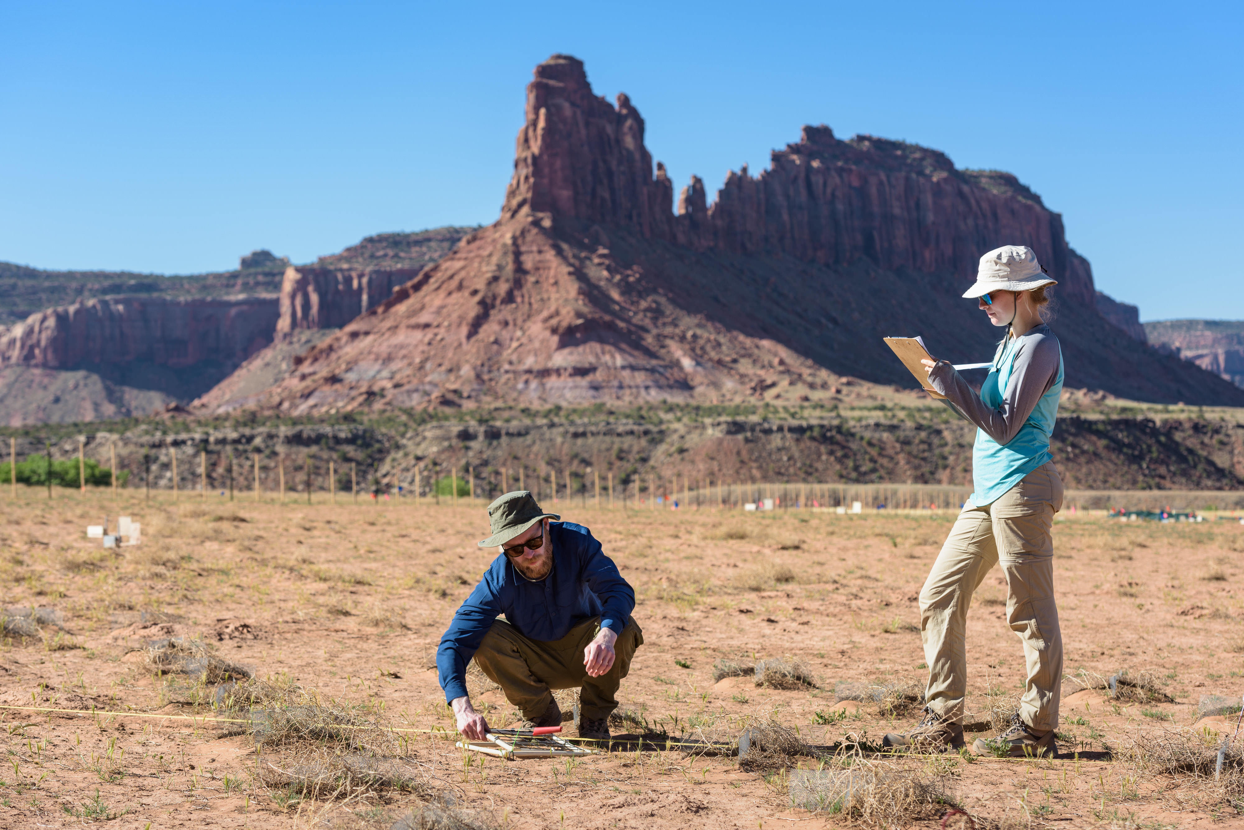 Two scientists measuring specimens in the desert.