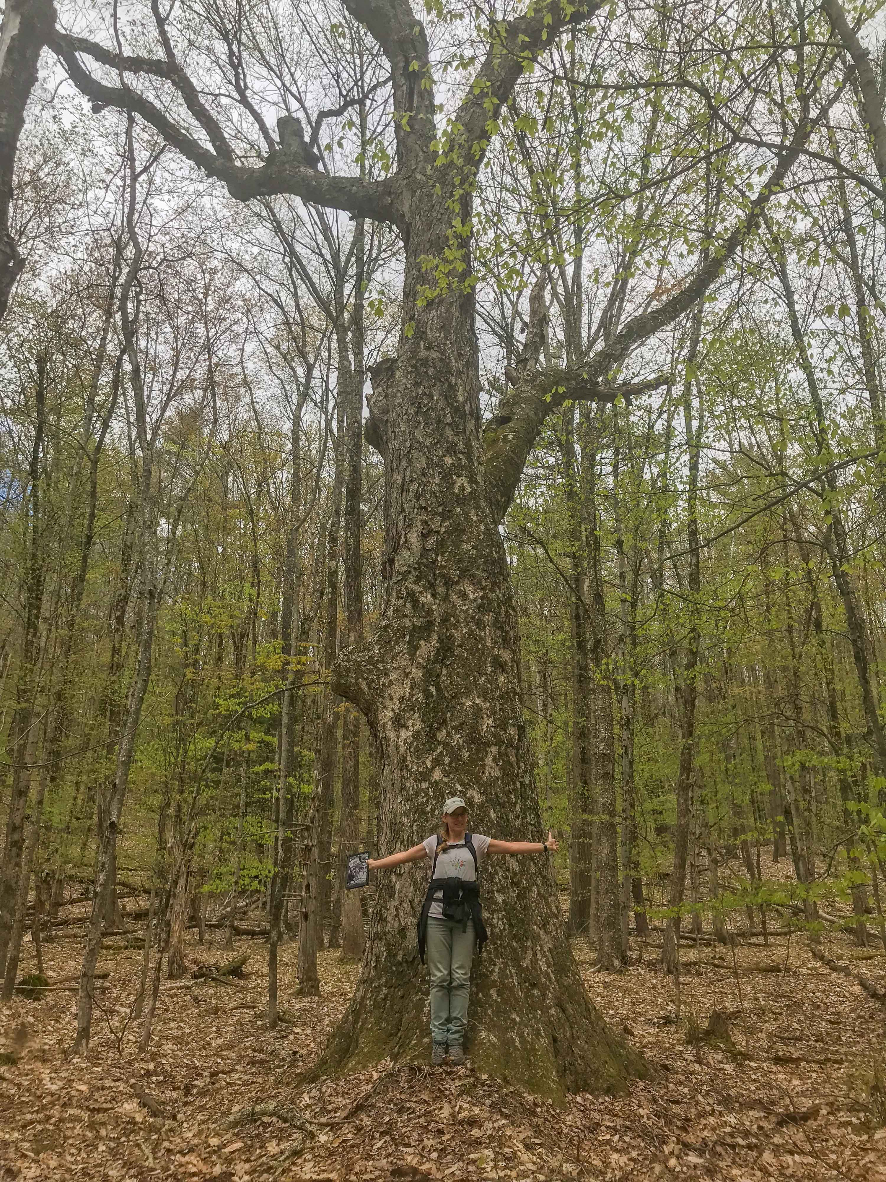 A woman stands at the base of a big tree, extending her arms. Her wingspan is just about the diameter of the tree. Smaller trees with bright green foliage surround the area.