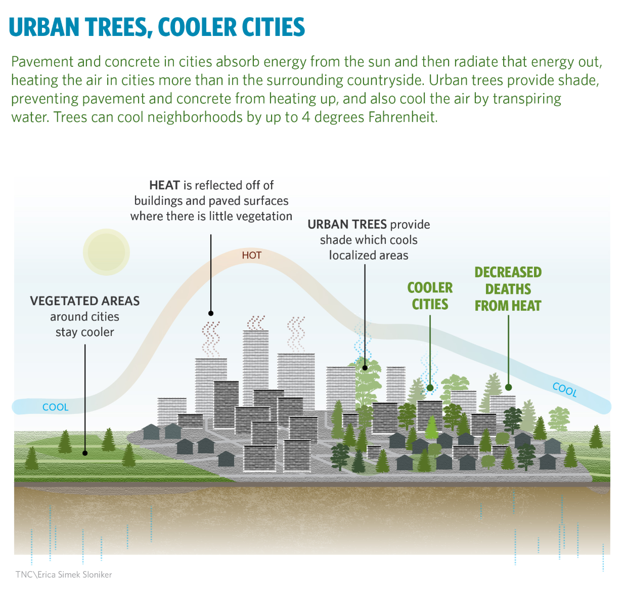 Urban Trees, Cooler Cities