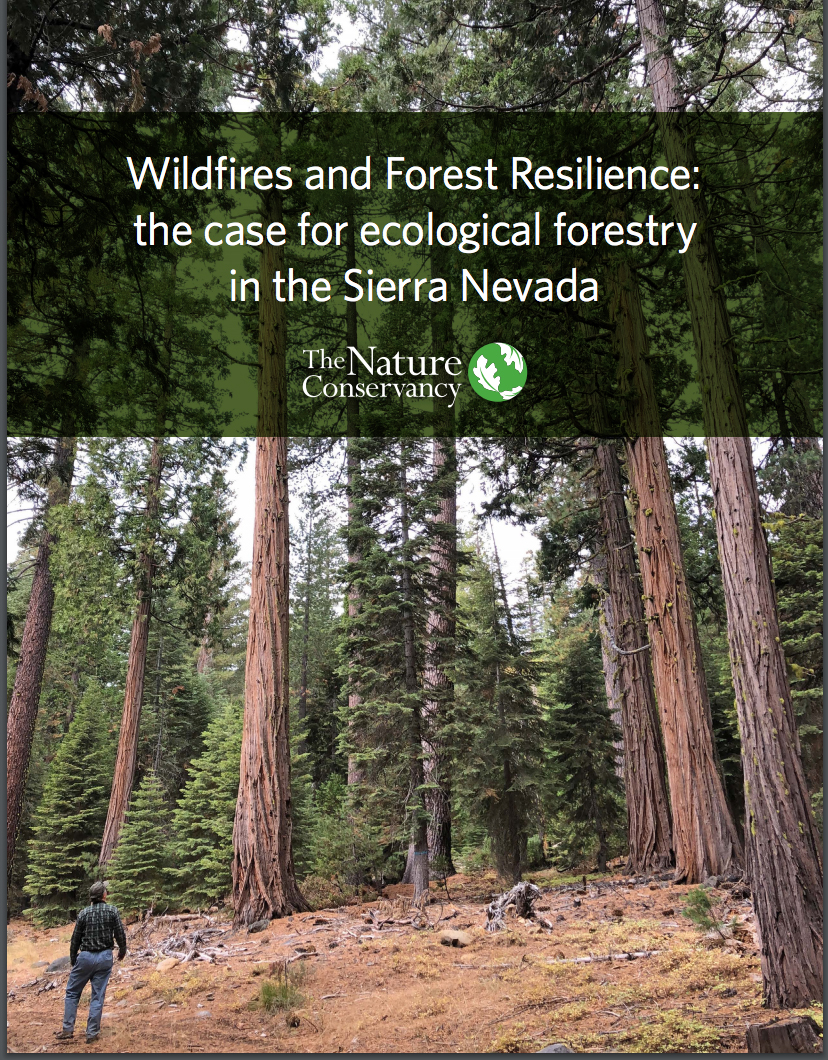 Wildfires and Forest Resilience Report