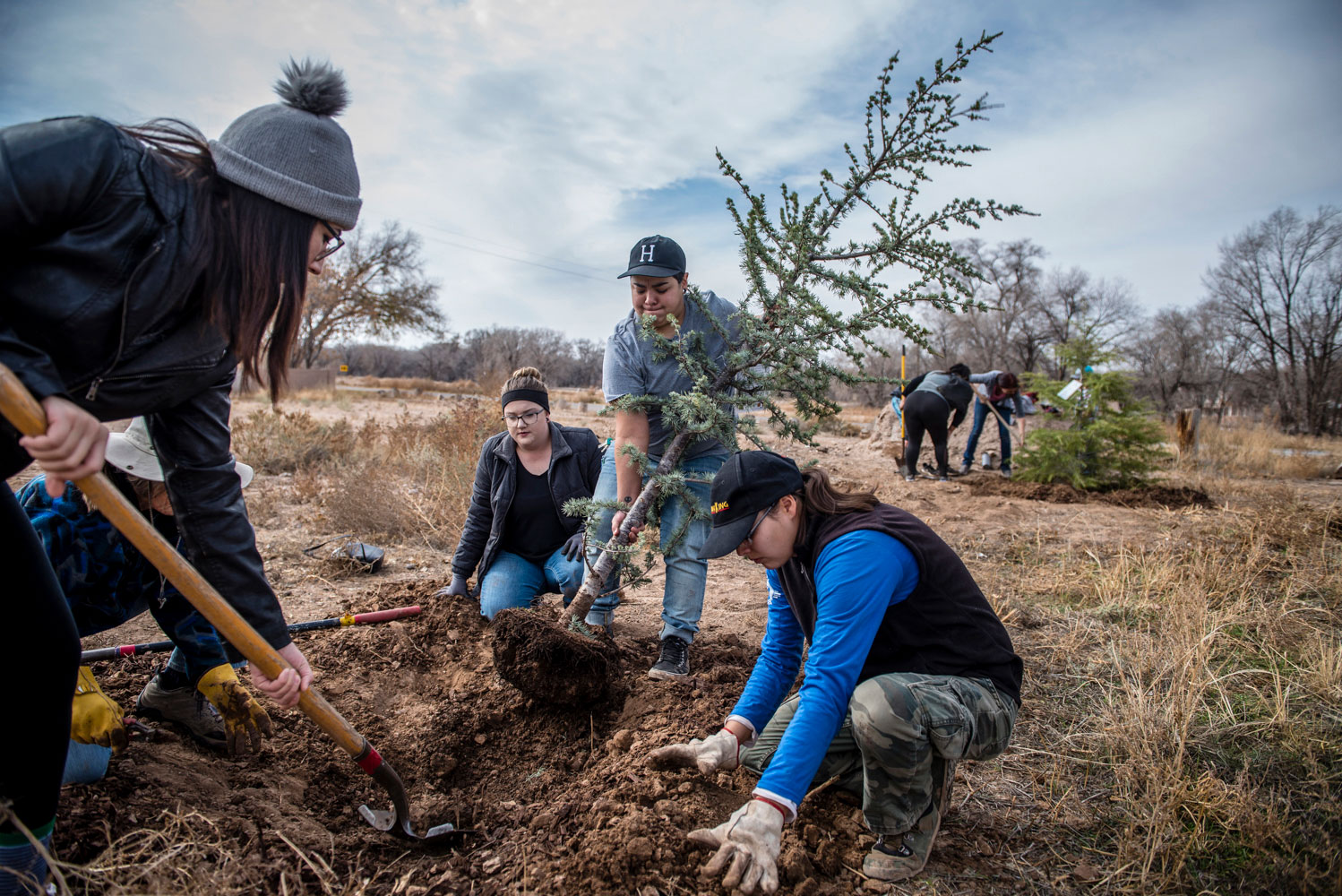 Volunteers planting a tree in the ground.