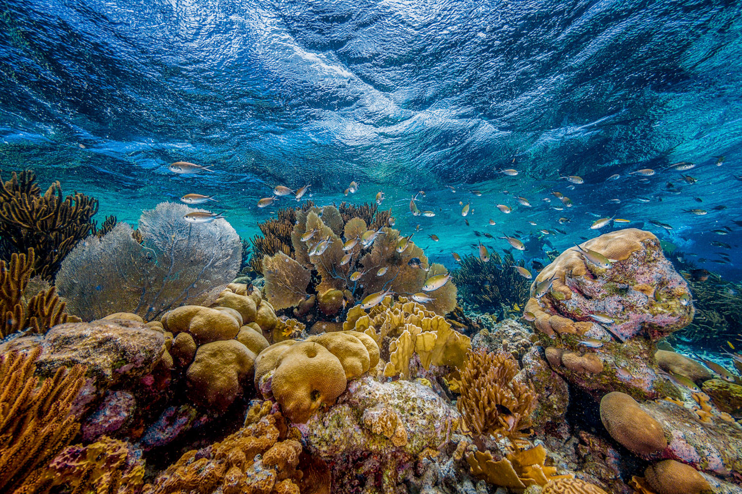 tropical fish swim among sponge coral, reef fans and other coral reef species in clear blue water.